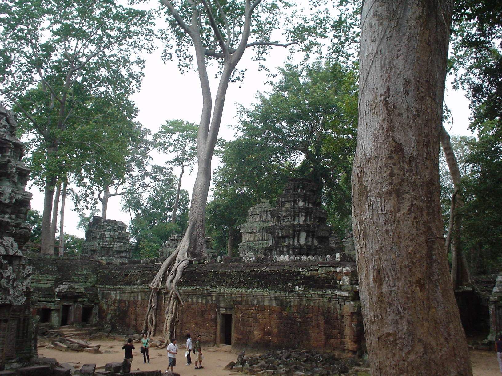 Siem Reap (Camboya) - Templo de laJungla