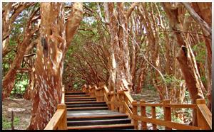 Isla Victoria - Bosque deArrayanes
