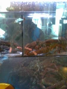 Vitrina con mariscos vivos