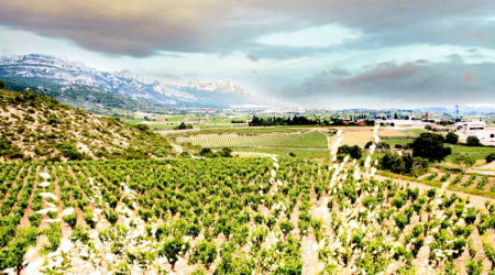 Bodegas Ostatu - Viñedos